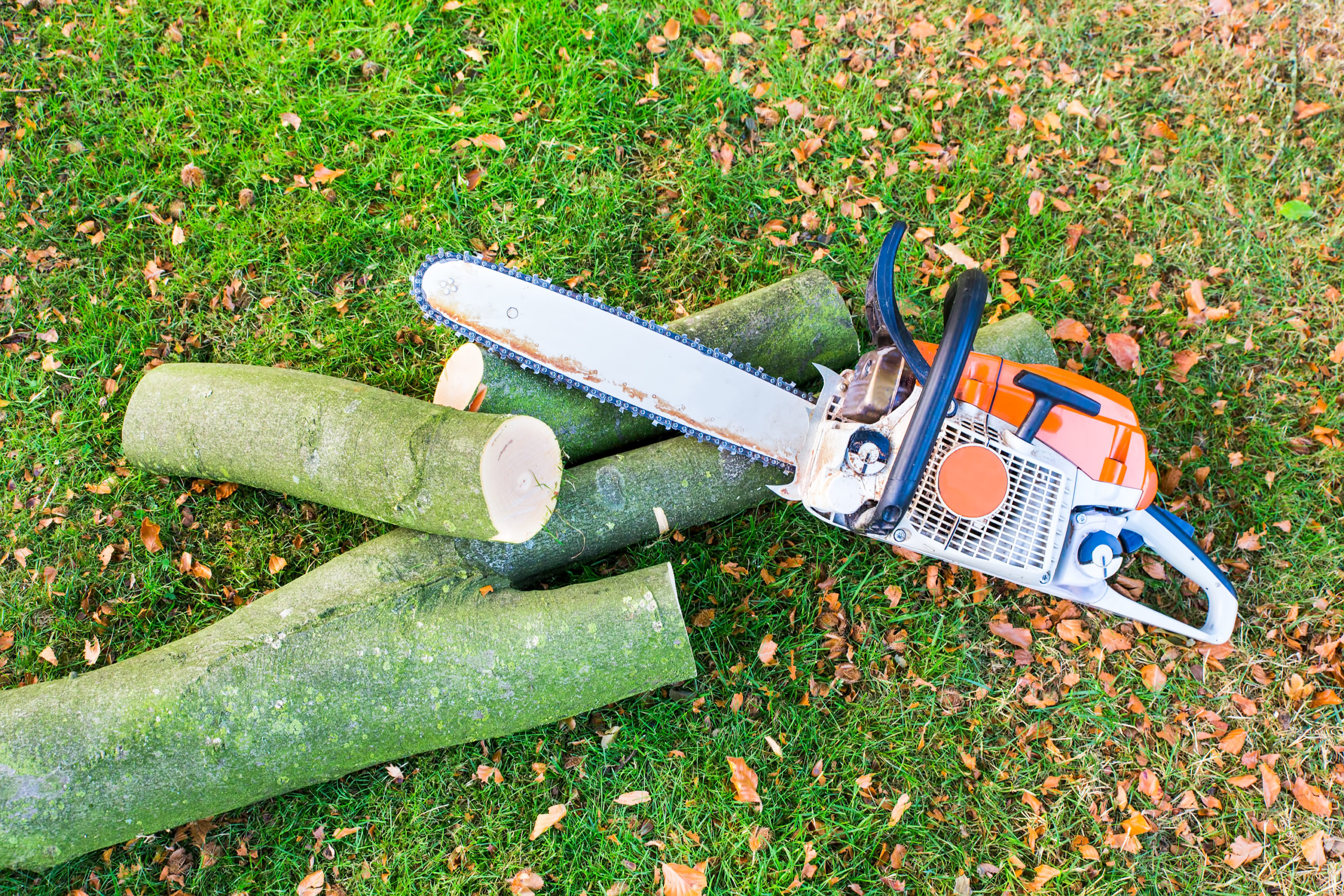 Tree cut with Chain saw