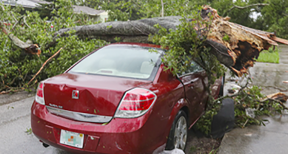 Car damaged by tree