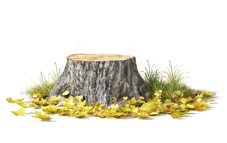 learn how to get rid of tree stumps to beautify your landscape