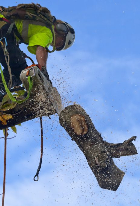 Arborist Services being done